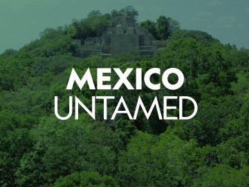 Mexico Untamed