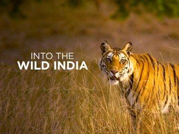 Into the Wild India