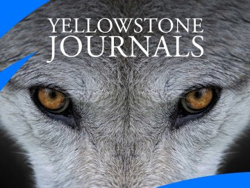 Yellowstone Journals
